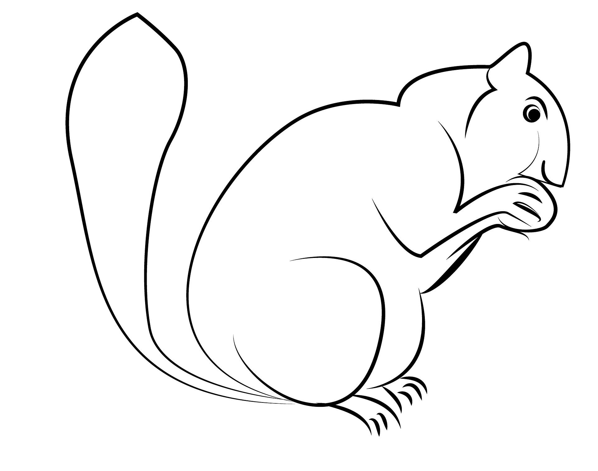 eichhörnchen kennenlernen   informationen und malvorlagen