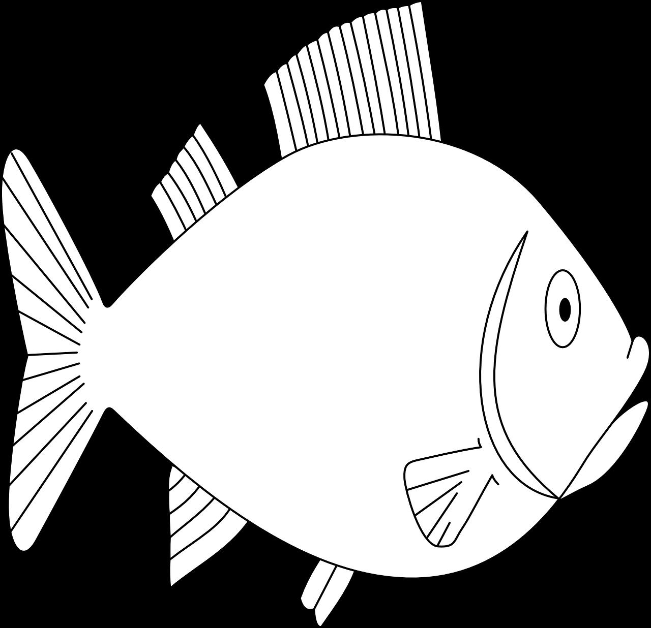 fische kennenlernen  informationen und malvorlagen für kinder
