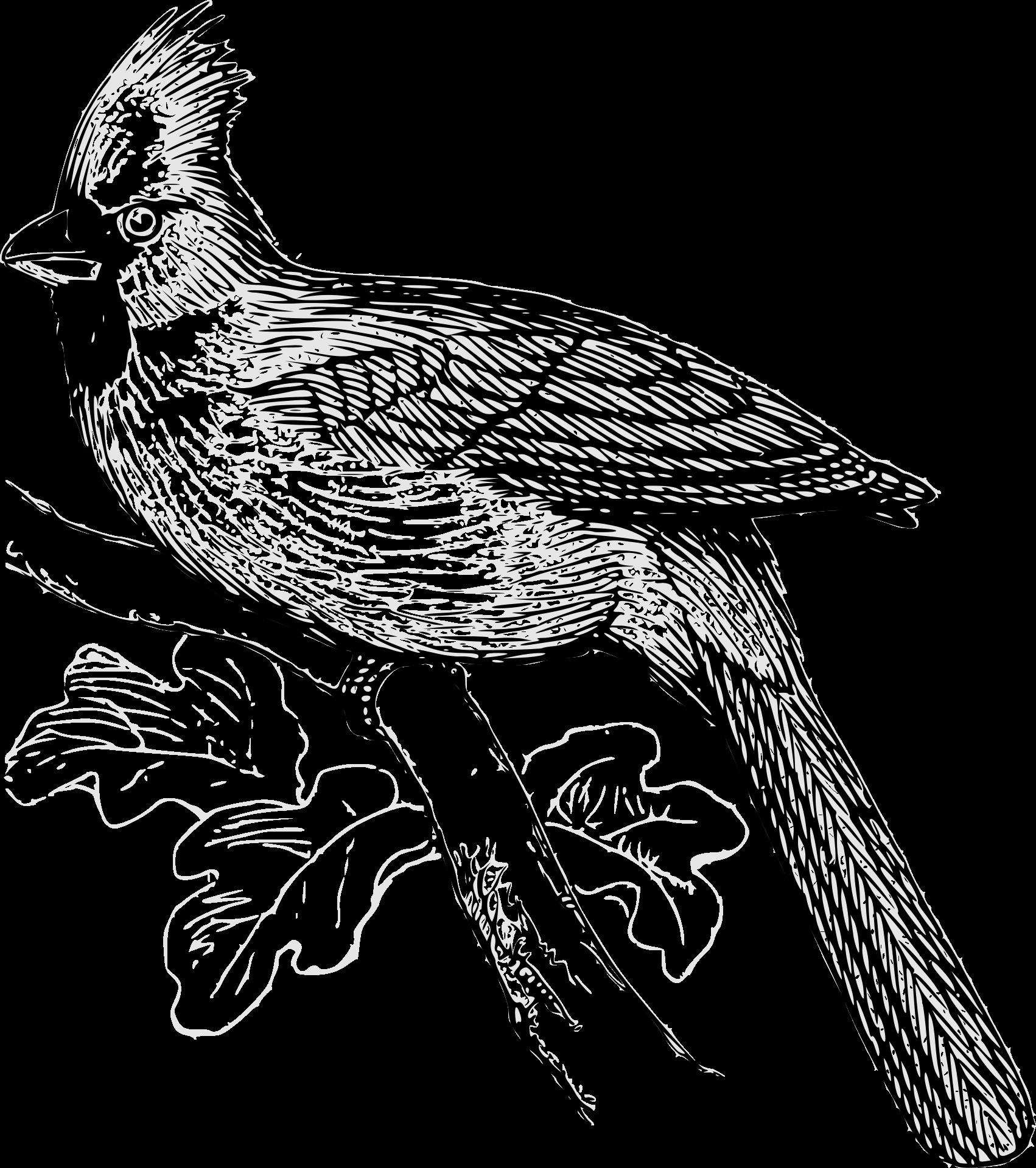vögel kennenlernen  informationen und malvorlagen für kinder