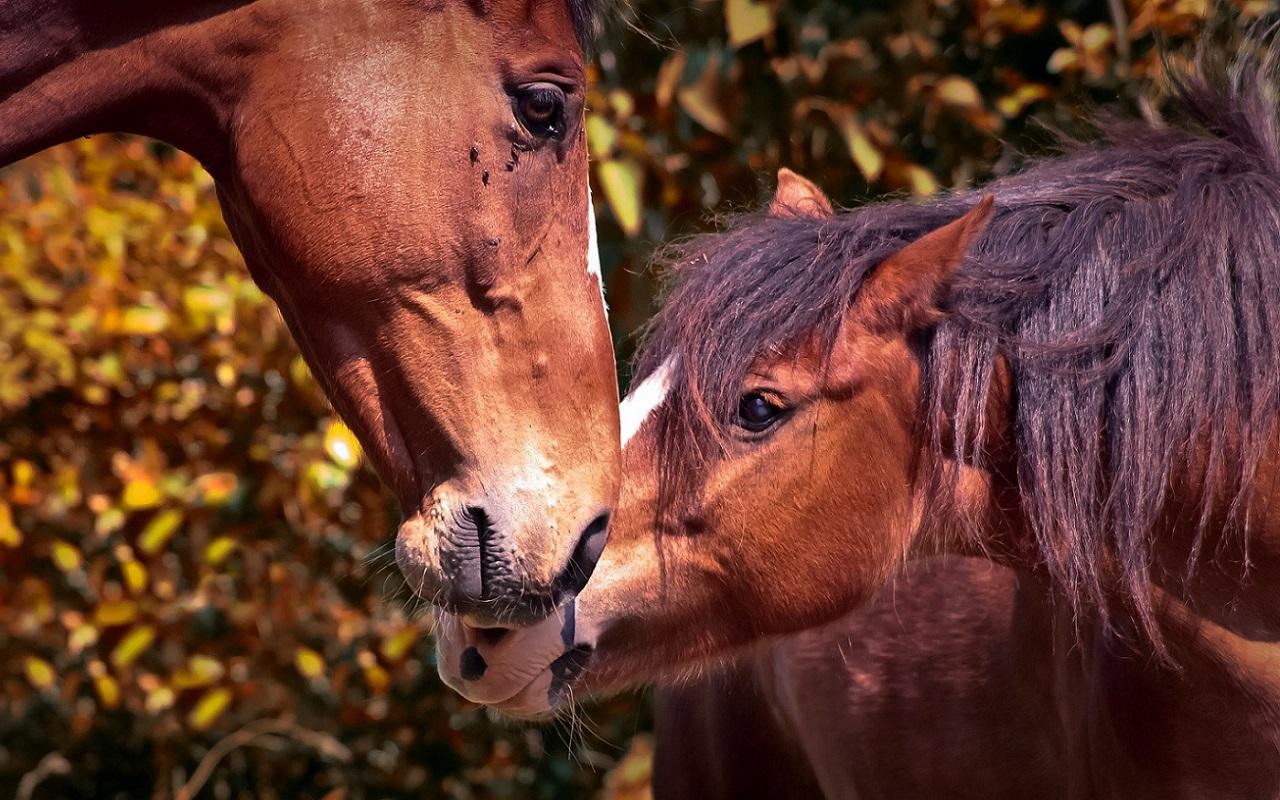 Pferdehilfe